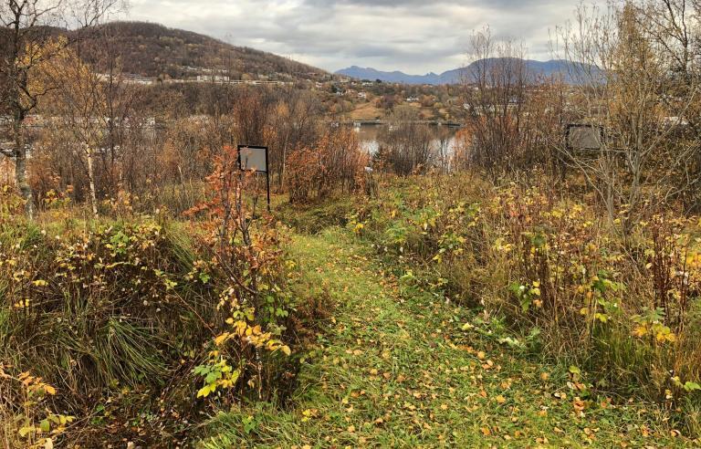 Byvandring til Slottet bygdeborg under Festspillene i Nord-Norge 2021. Foto: STMU